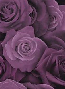 Arthouse Austin Rose Purple Wallpaper 10.05m x 53cm